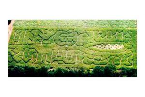 2002 Strom's Farm First Maze