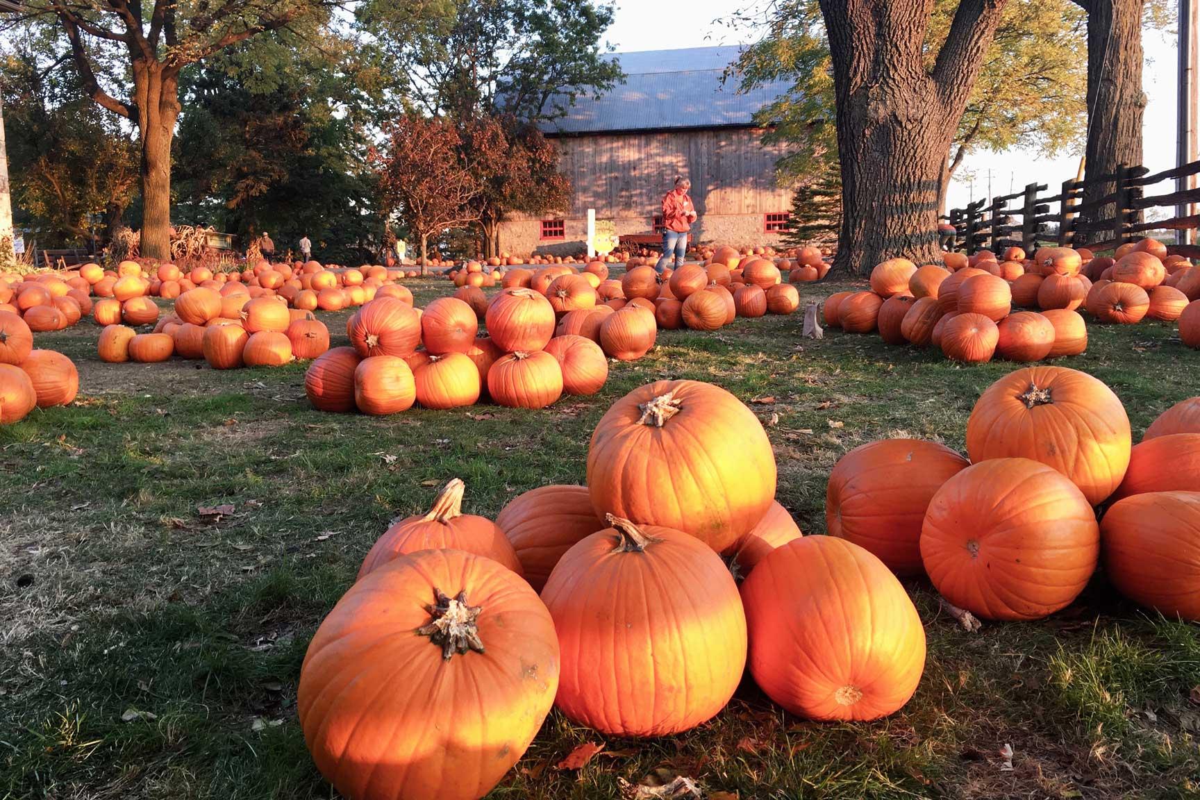 Strom's Pumpkins