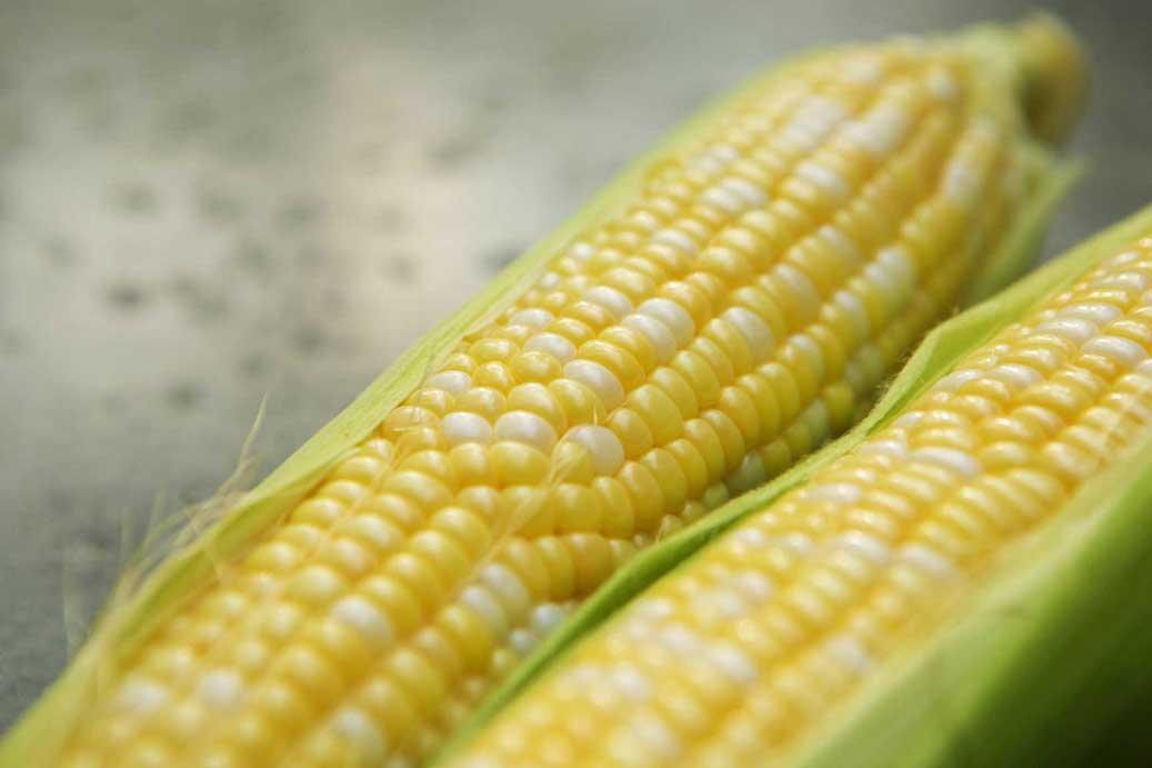 Storm's Fresh Sweet Corn