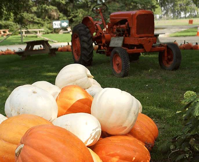 Strom's Pumpkins and Tractor
