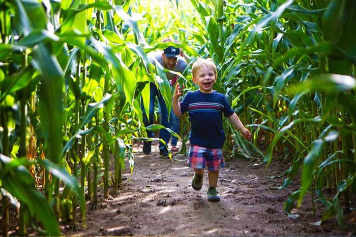 Strom's Farm Harvest Fun Area